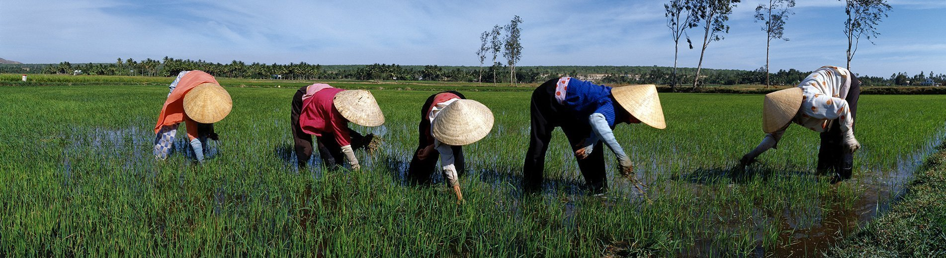 Women working in a ricefield in Vietnam - Photography by Hans Kemp