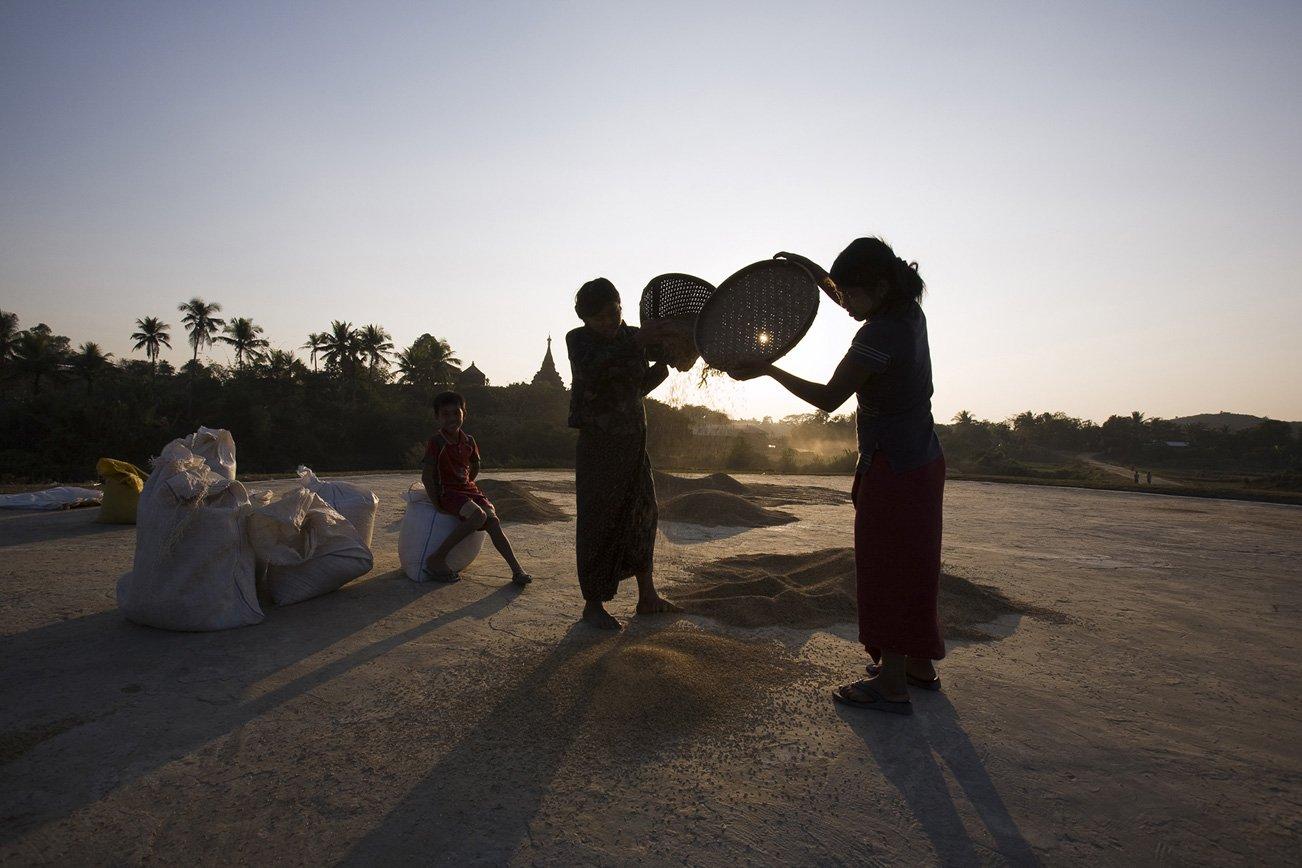 Winnowing of rice as the sun sets over Mrauk U.