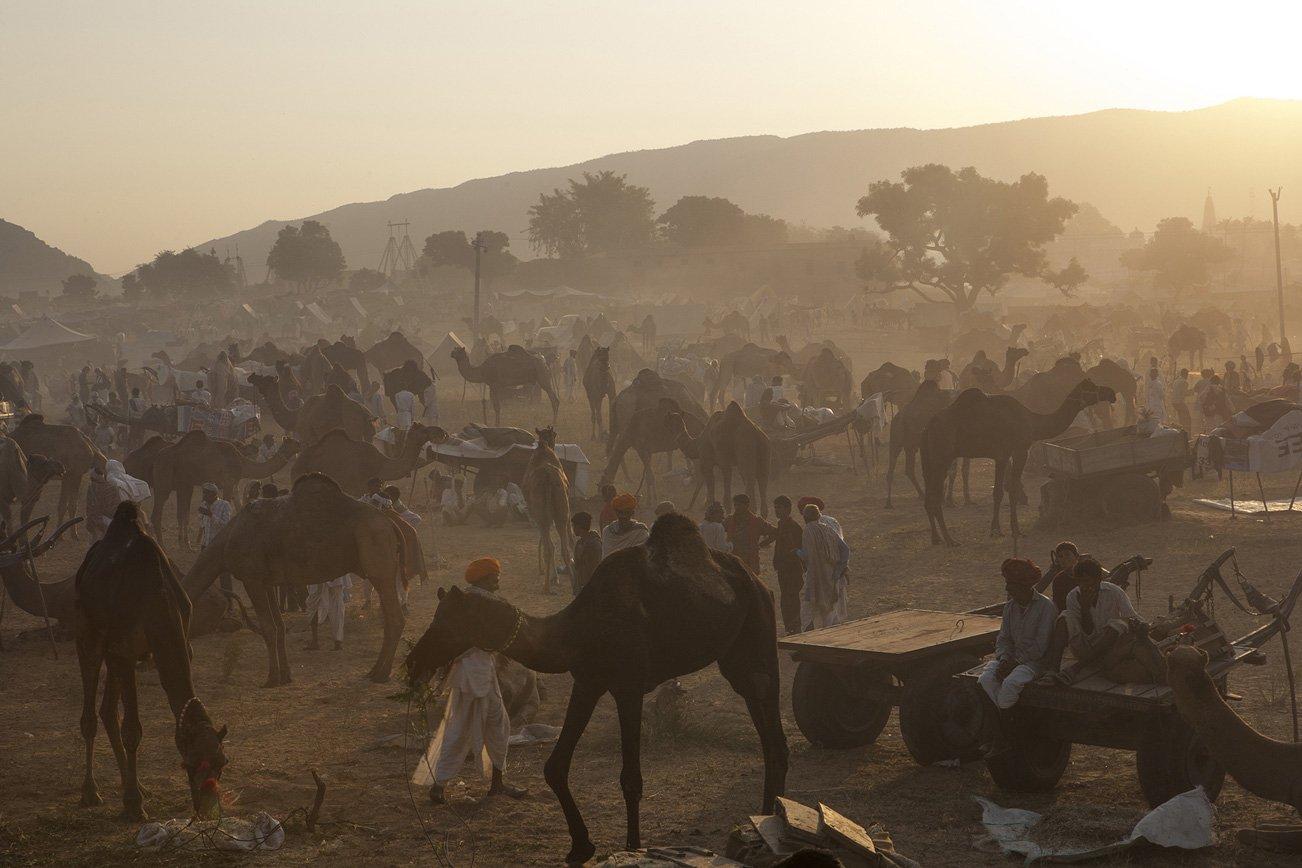 Dawn at the Pushkar Camel Fair.