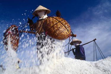 Salt harvest near Phan Rang, Vietnam, 1996